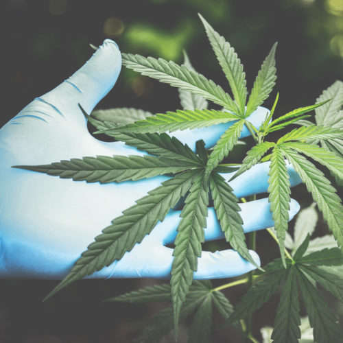 Dispensary packaging and Dispensary Supplies Wholesaler in Vancouver